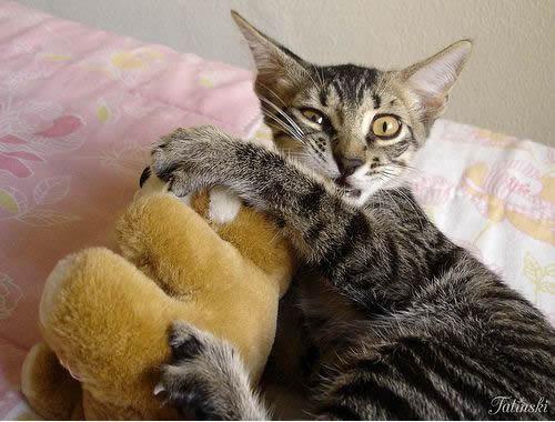 Cute kitten embraces stuffed animal